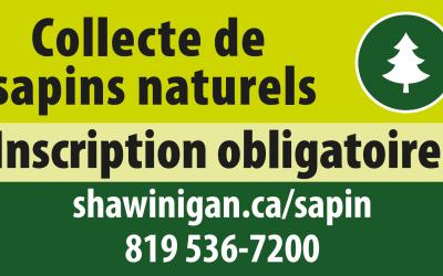 Sapins : inscription obligatoire pour la collecte