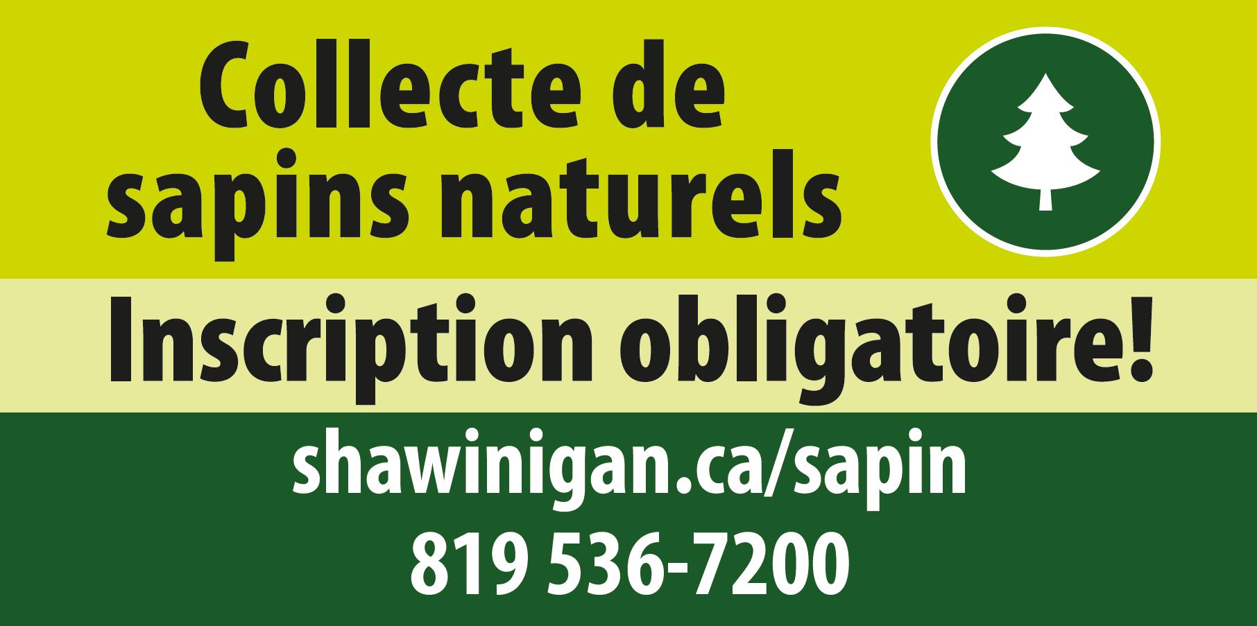Affiche de colecte de sapins naturels