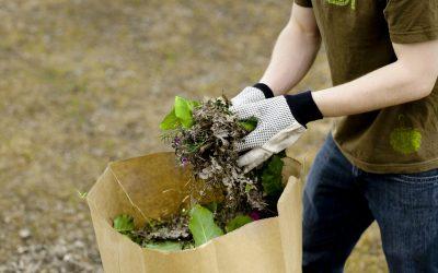 Début novembre : collecte spéciale de résidus verts
